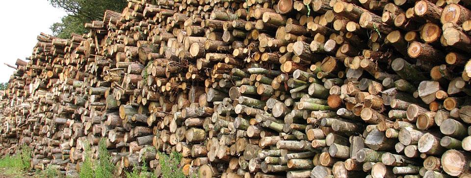 Prodej palivového dřeva vysočina